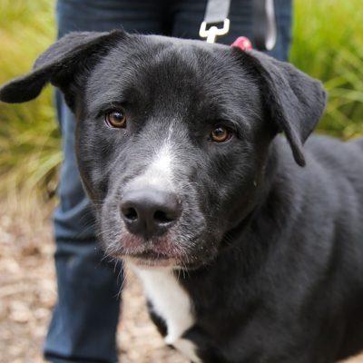 Save A Dog - Animal Adoptions