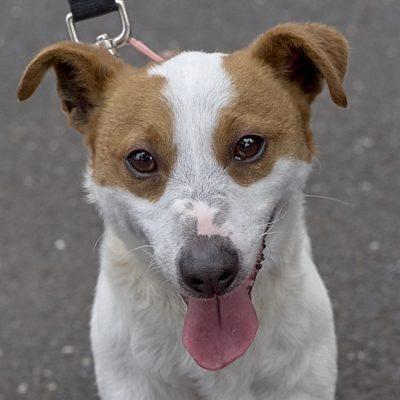 Home - Save A Dog